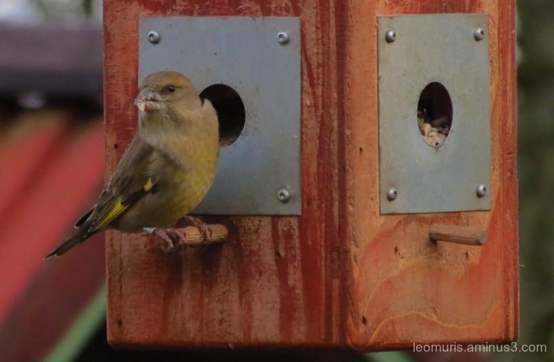 bird is eating