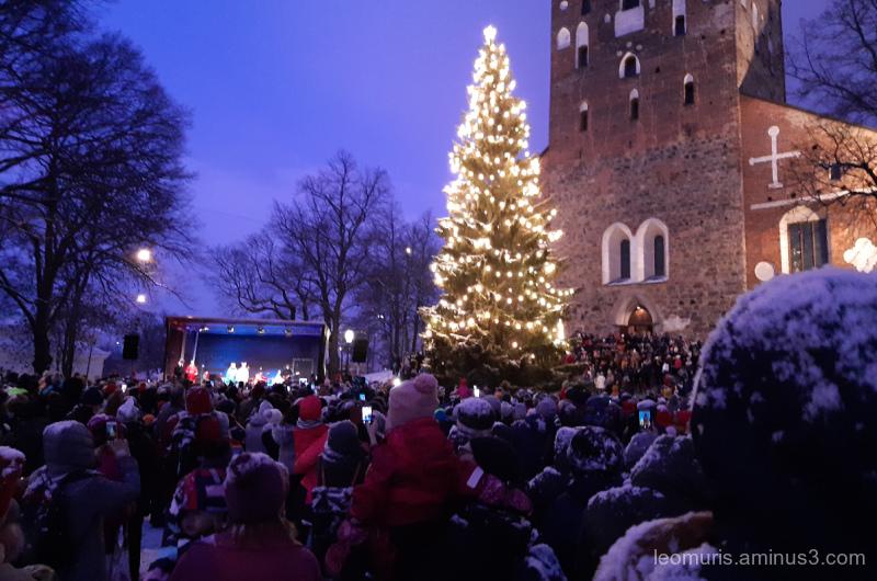 christnas tree and lights