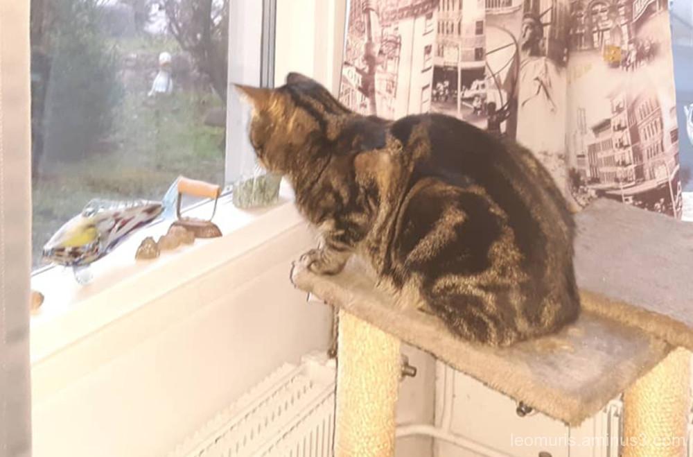 leevi in window