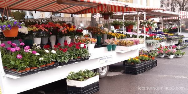 flowers on the market place