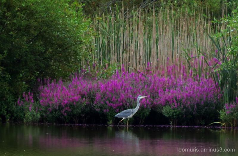 It is like a beautiful garden