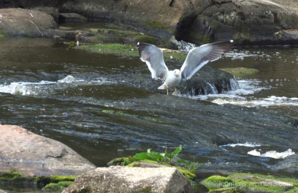 catcher, river