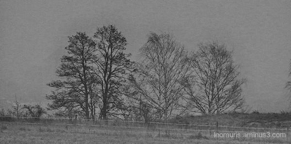 gray view