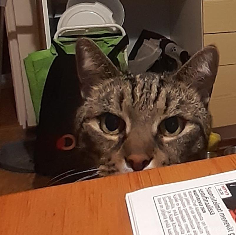 leevi is curious