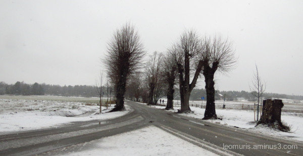 trees and gray weather