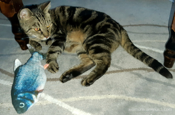 leevi and toy fish