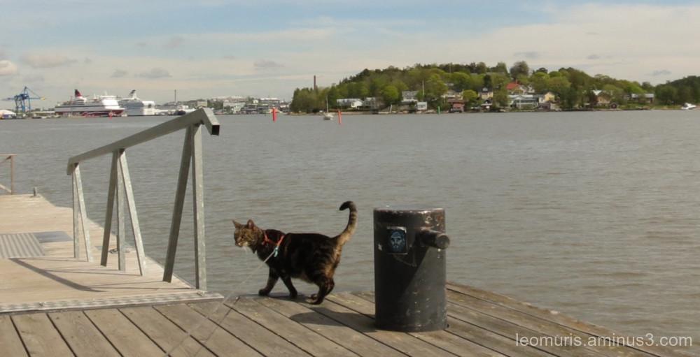 leevi on the pier