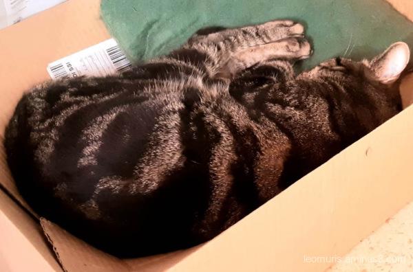 sleeping leevi