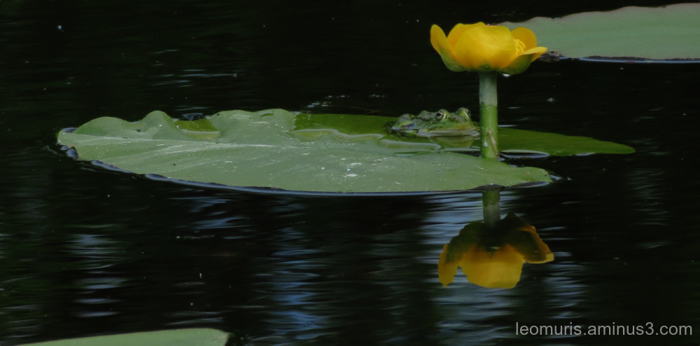Frog and flower