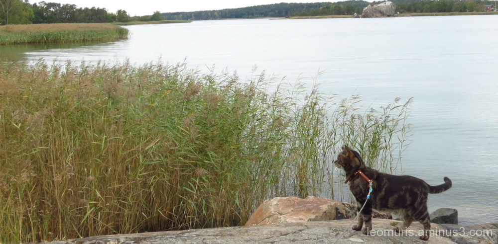 Leevi on the rock