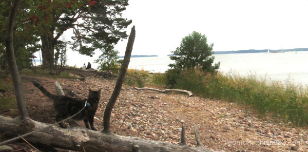 Leevi and see view