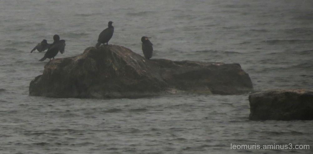 Birds in yhe mist