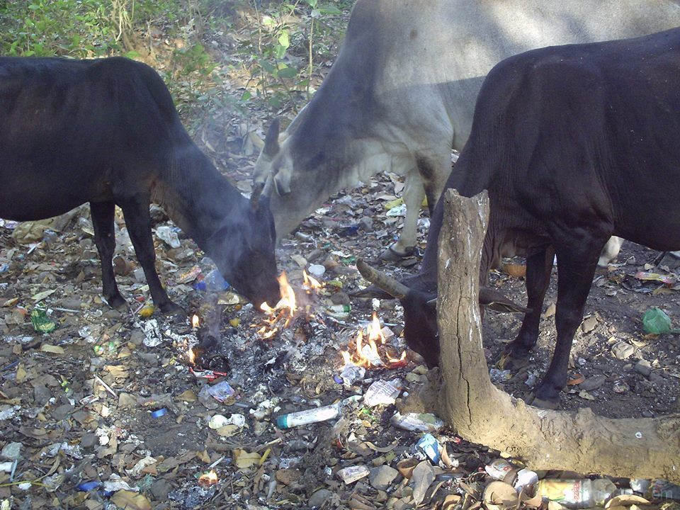 le matin, les Indiens brulent les sacs dordures et