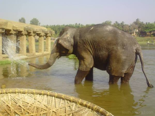 india elephant river hampi