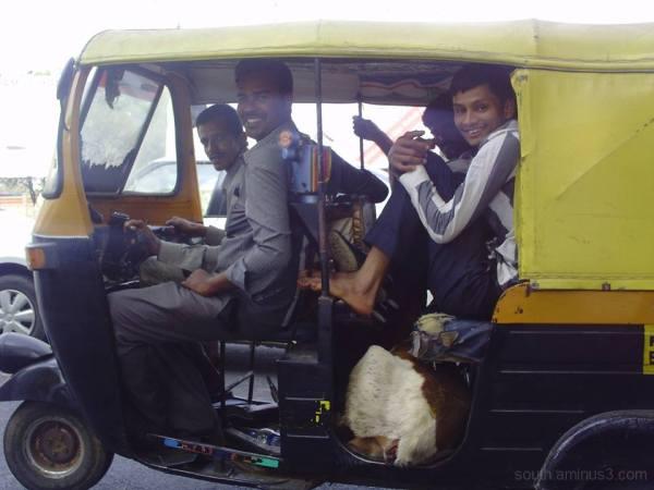 2 ou trois chèvres dans un rickshaw en inde india