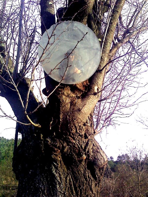 arbre miroir