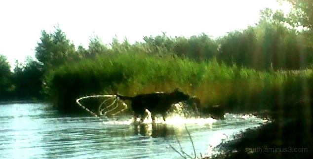 lac chien eau