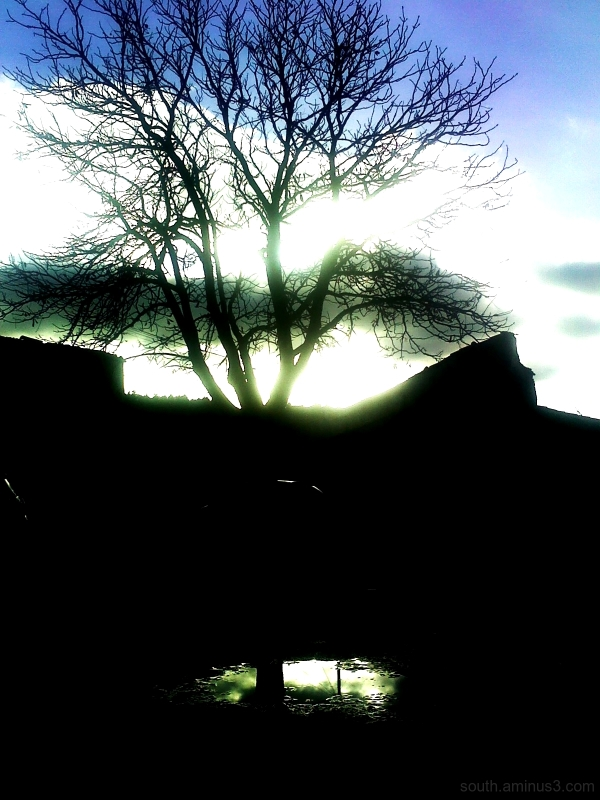 arbre reflet eau ciel sky reflection