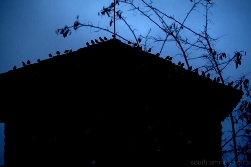oiseau bird etourneau chateau roof ombre chinoi s