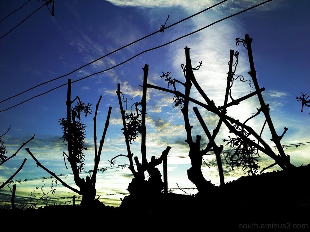 grape sky cloud light