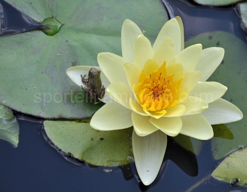 frog resting on a flower