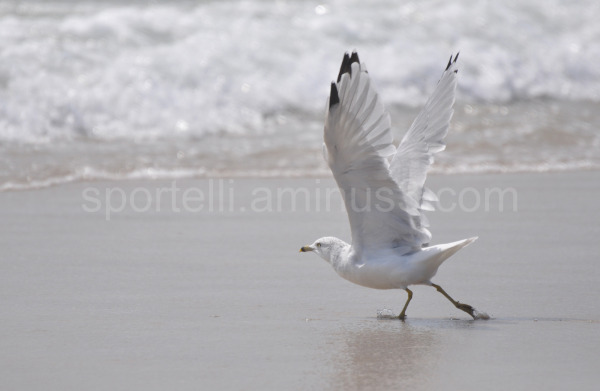 seagull flying away