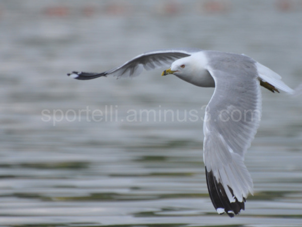 seagull flying by over water