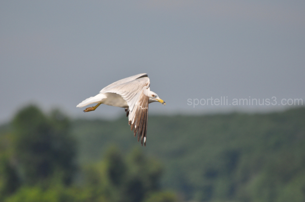seagull flying by