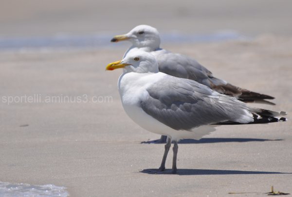 two seagulls waiting on the sand
