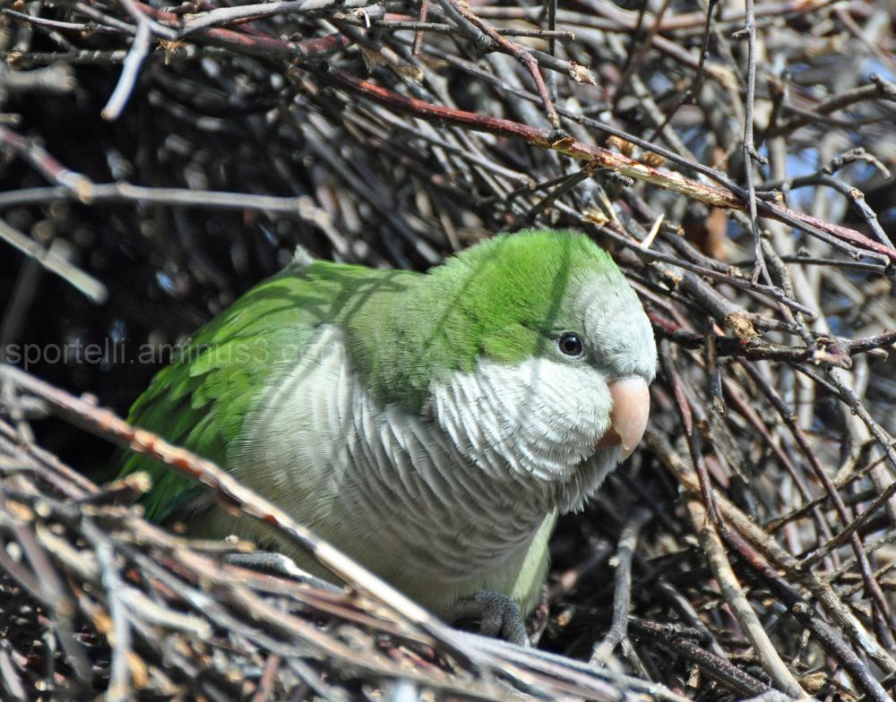 parakeet peeking out of nest