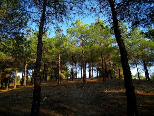 Chitgar Park 04