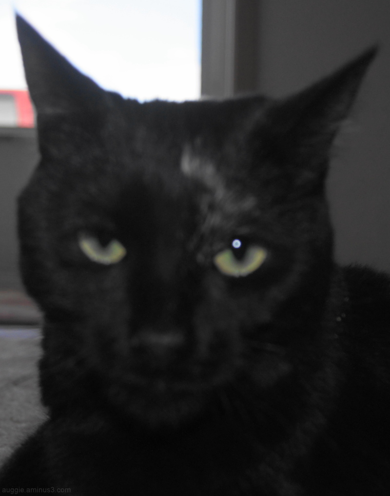 Mad Kitty