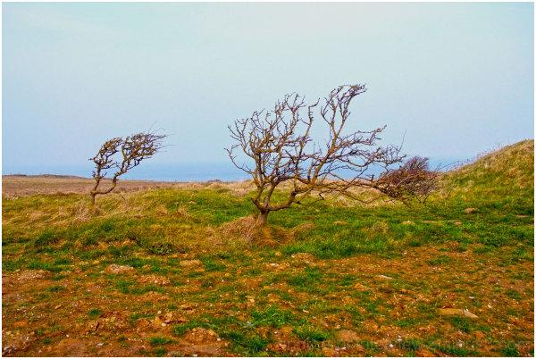 Landscape *