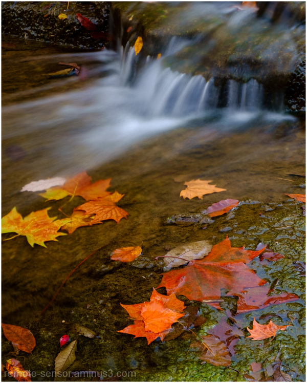 water flows over fallen leaves