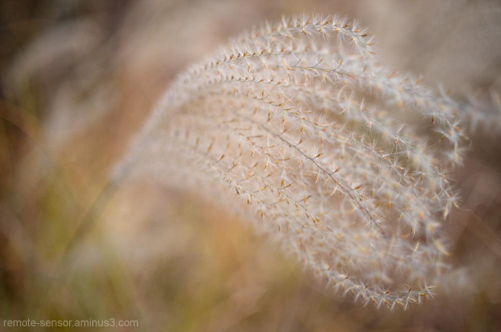 macro image of a sedge in the autumn