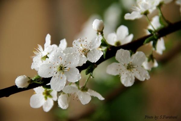 بهار من... - فروردین 91