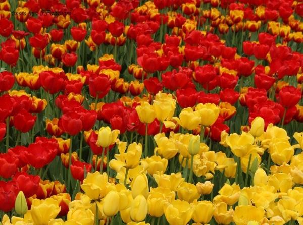 بهار من ، اردیبهشت من...! - فروردین 91