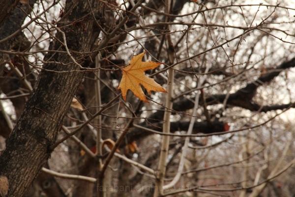آخرین برگ....