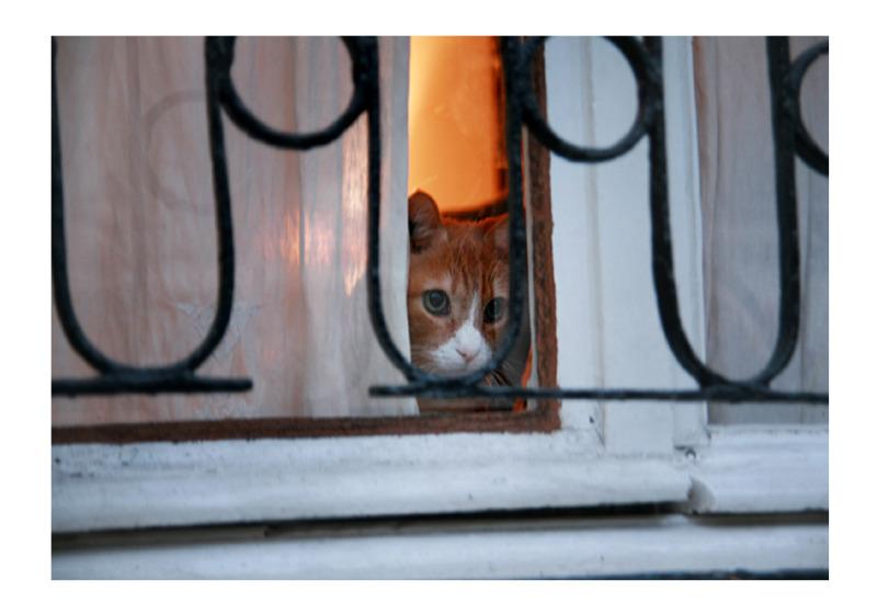 window watcher
