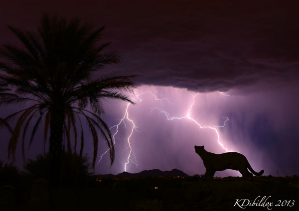 Mountain Lion lightning!