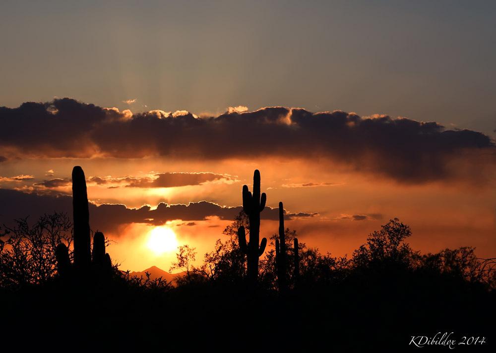A golden Arizona sunset