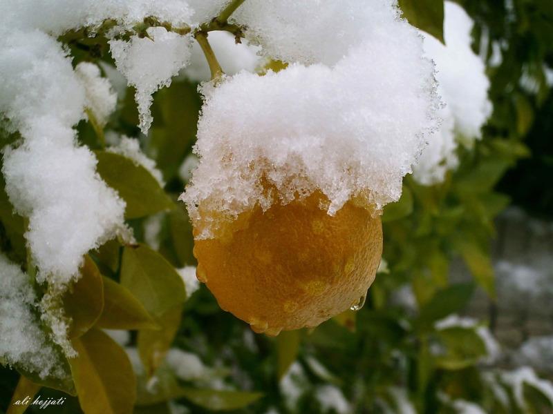orange and snow