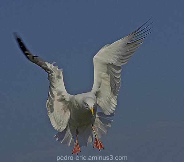 Birds gulls