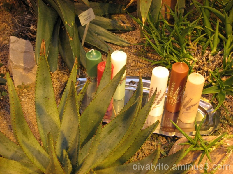 Candles and cacti
