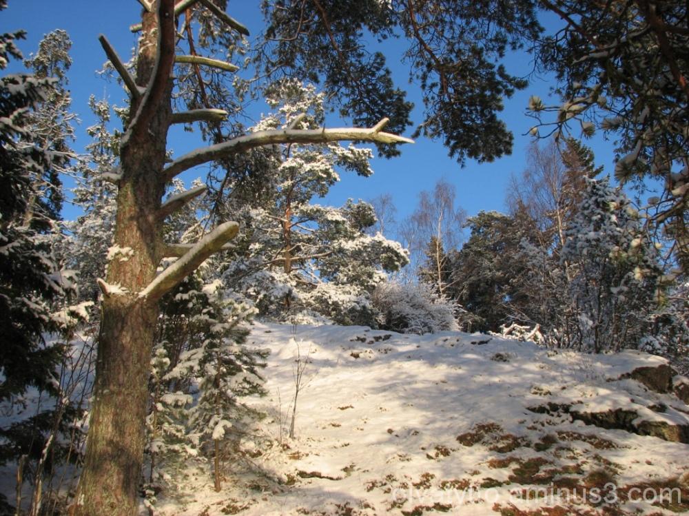 winter Day 8.1.2012