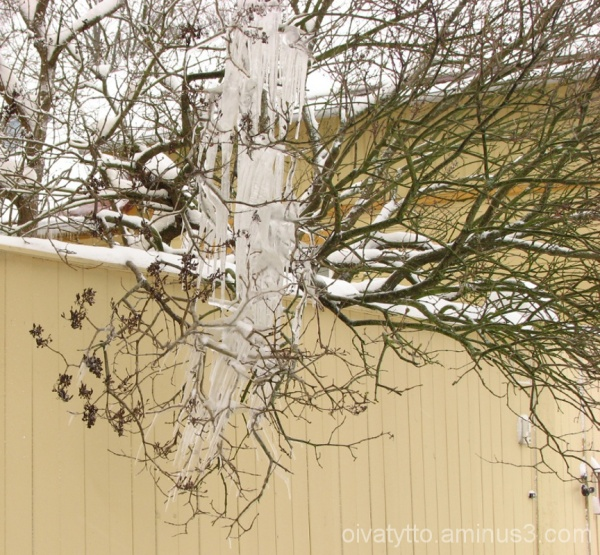 Branches covered with ice