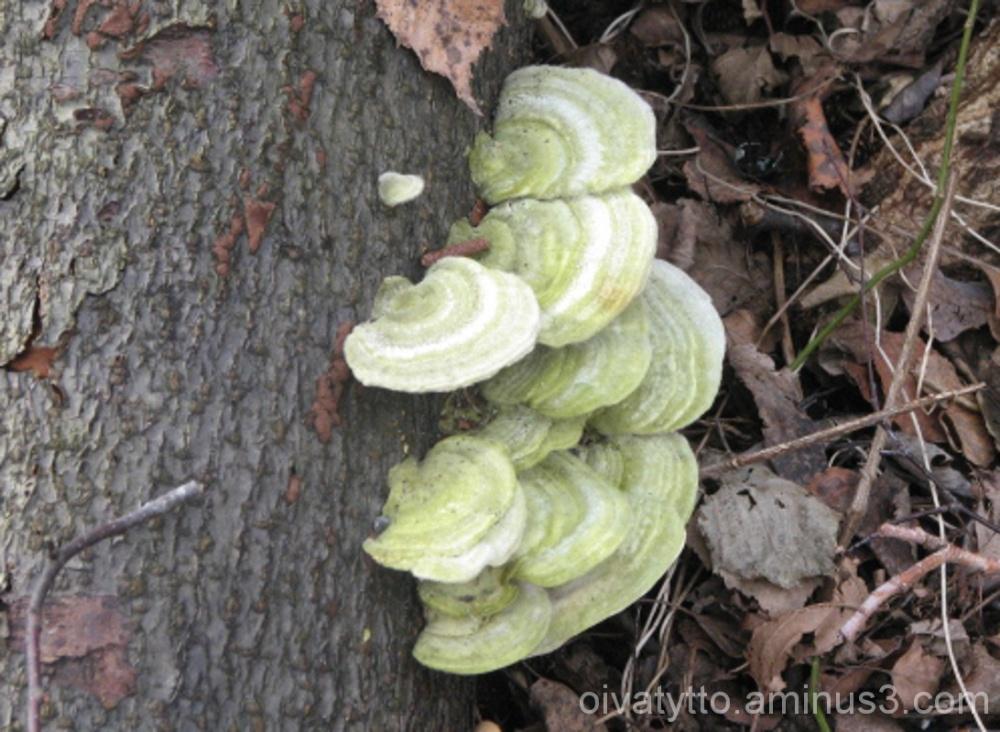 A beautiful fungus