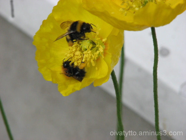Flowers and Bees!