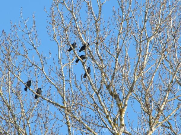 Birds in the sun!