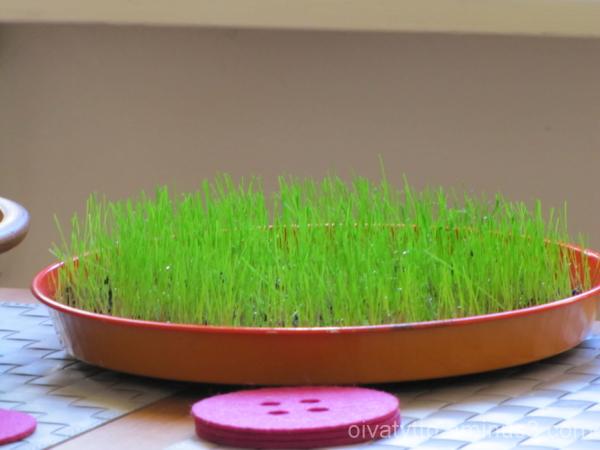 Rai grass!